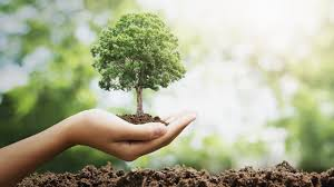 picture of a hand holding a small tree near the ground.